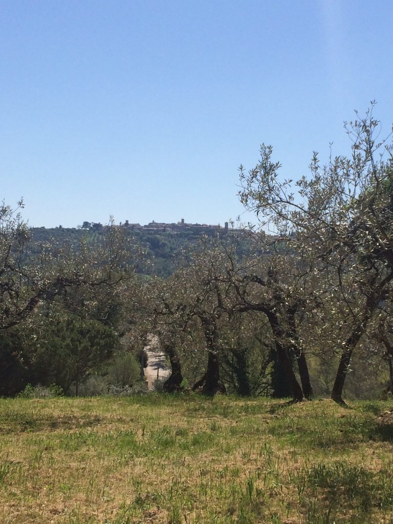 montefalco-olive-threes-your-italian-travel-guide